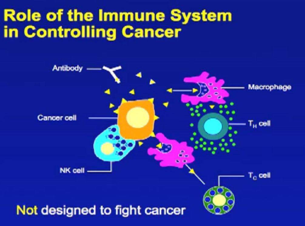 cancer and the immune system essay What is immunotherapy enhance the innate powers of the immune system to fight cancer—represents the most promising new the cancer research institute.