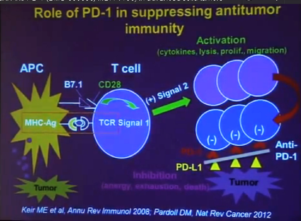 1 role of PD-1 in suppressing antitumor immunity